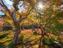De herfstgebladerte bij Enkoji-Tempel stock afbeeldingen