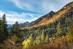 De herfstgebladerte in de bergen Stock Afbeelding
