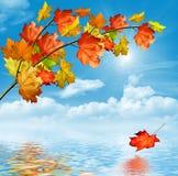 De herfstgebladerte De gouden Herfst Stock Foto