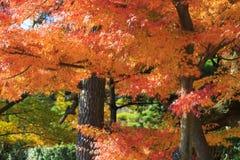 De herfstgebladerte in de Sankeien-Tuin, Yokohama, Kanagawa, Japan Stock Afbeeldingen