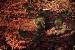 De herfstgebladerte in de Sankeien-Tuin, Yokohama, Kanagawa, Japan Royalty-vrije Stock Afbeelding