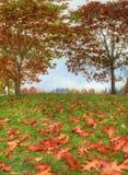 De herfstgebladerte dichtbij aan ver Royalty-vrije Stock Afbeeldingen