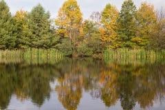 De herfstgebladerte die in een kleine vijver nadenken Stock Afbeeldingen