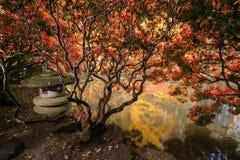 De herfstgebladerte en bezinningen in vijver Royalty-vrije Stock Foto