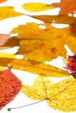 De herfstgebladerte in geel, rood en oranje Stock Foto