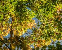 De herfstgebladerte in het bos Royalty-vrije Stock Fotografie