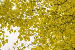 De herfstgebladerte met een Zonster in de achtergrond Royalty-vrije Stock Foto's