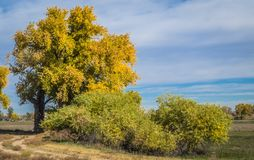 De herfstgebladerte in oostelijk Colorado royalty-vrije stock foto's