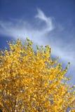 De herfstgebladerte op berkboom stock fotografie