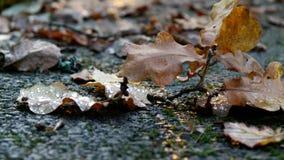 De herfstgebladerte op steenoppervlakte Royalty-vrije Stock Afbeeldingen