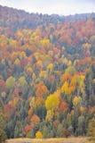 De herfstgebladerte over rivier Stock Fotografie