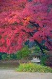 De herfstgebladerte in Rikugien-Tuin, Komagome, Tokyo Royalty-vrije Stock Fotografie