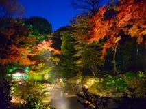 De herfstgebladerte in Rikugien-Tuin, Komagome, Tokyo royalty-vrije stock afbeeldingen