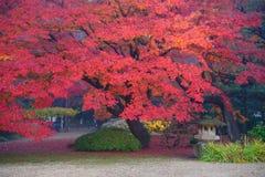 De herfstgebladerte in Rikugien-Tuin, Komagome, Tokyo Royalty-vrije Stock Foto