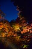 De herfstgebladerte in Rikugien-Tuin, Komagome, Tokyo royalty-vrije stock afbeelding
