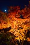 De herfstgebladerte in Rikugien-Tuin, Komagome, Tokyo Stock Afbeelding