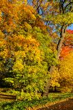 De herfstgebladerte van bomen stock foto's