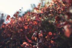De herfstgebladerte in de zon stock foto's