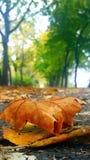 De herfstgeest Stock Fotografie