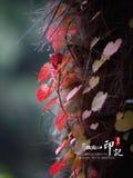 De herfstgeheugen Zhengzhou stock afbeelding