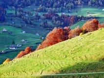 De herfstgevoel op de weilanden en de weiden van Thur-Riviervallei stock afbeelding