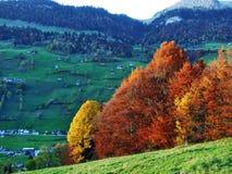 De herfstgevoel op de weilanden en de weiden van Thur-Riviervallei royalty-vrije stock fotografie