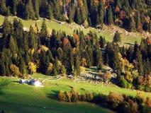 De herfstgevoel op de weilanden en de weiden van Thur-Riviervallei stock afbeeldingen