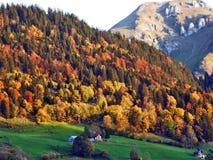 De herfstgevoel op de weilanden en de weiden van Thur-Riviervallei royalty-vrije stock foto