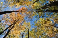 De herfstgloed Royalty-vrije Stock Afbeeldingen