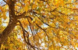 De herfstglorie Royalty-vrije Stock Afbeeldingen