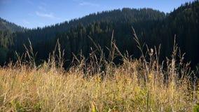 de herfstgras in de bergen stock foto