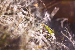 De herfstgras die door ochtenddauw behandelen Royalty-vrije Stock Afbeelding