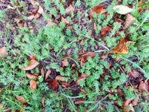 De herfstgras met bladerentextuur Stock Fotografie