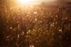 De herfstgras op zonsondergang royalty-vrije stock fotografie