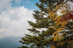 De herfsthaarlok bij Kachi-ropeway dichtbij Meer Kawaguchiko, Japan stock foto