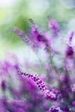 De herfstheide met bokeh Stock Foto