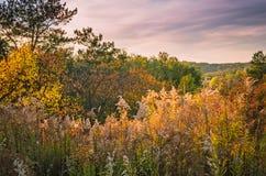 De herfstheuvels met kleurrijke installaties stock afbeeldingen