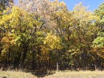 De herfsthout, gele en groene bladeren, mooie de herfstkleuren royalty-vrije stock foto