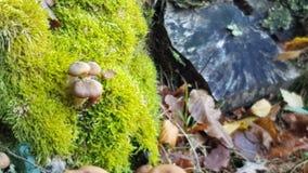 De herfstidylle met paddestoel stock foto