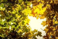 De herfstinstallatie gele esdoorntak in het bos stock foto