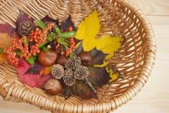 De herfstinzameling, bladeren, conkers. Royalty-vrije Stock Foto's