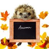 De herfstkaart Stock Afbeeldingen