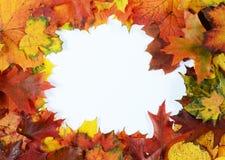 De herfstkader Royalty-vrije Stock Afbeelding