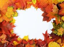 De herfstkader Stock Fotografie