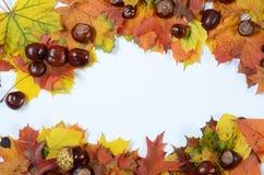 De herfstkader Royalty-vrije Stock Afbeeldingen