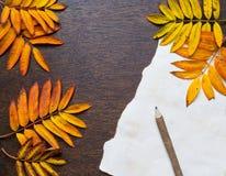 De herfstkader met bladeren en oud document Royalty-vrije Stock Afbeelding