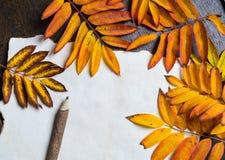De herfstkader met bladeren en oud document Stock Foto's