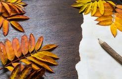 De herfstkader met bladeren en oud document Stock Fotografie