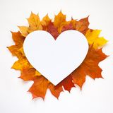 De herfstkader met bladeren op witte achtergrond Stock Fotografie