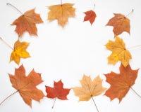 De herfstkader met bladeren op witte achtergrond Royalty-vrije Stock Fotografie